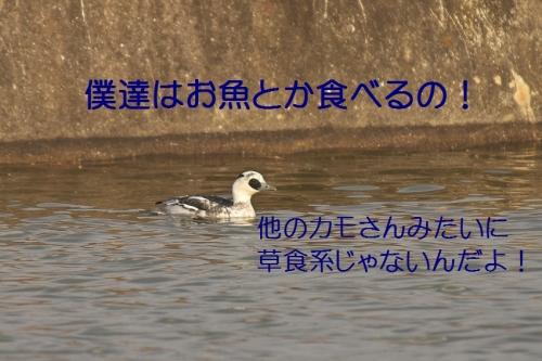 080_20140116184034365.jpg
