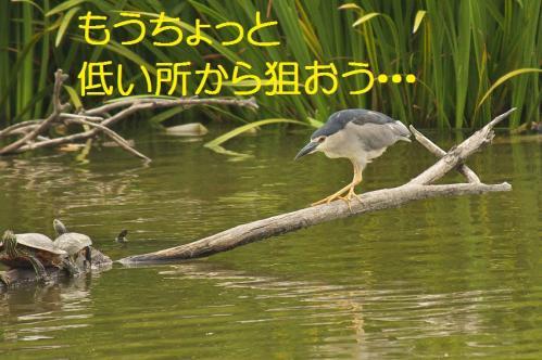 090_20130820194504dab.jpg