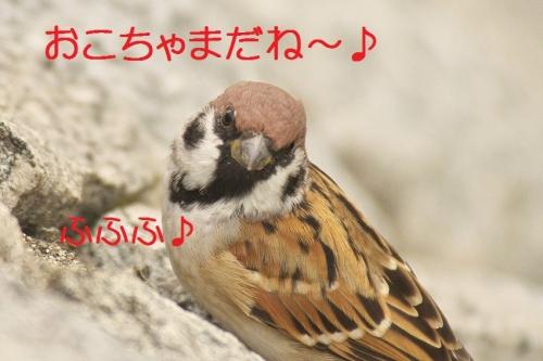 090_201310191806332bc.jpg