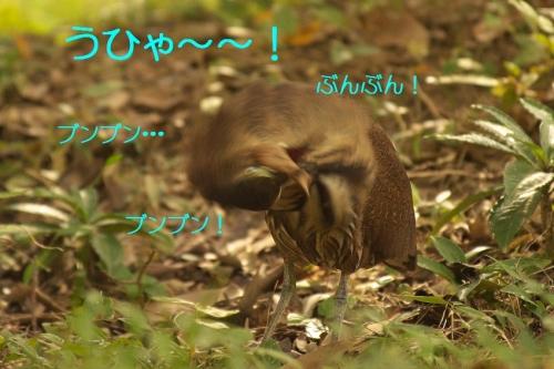 090_20131106210612df6.jpg