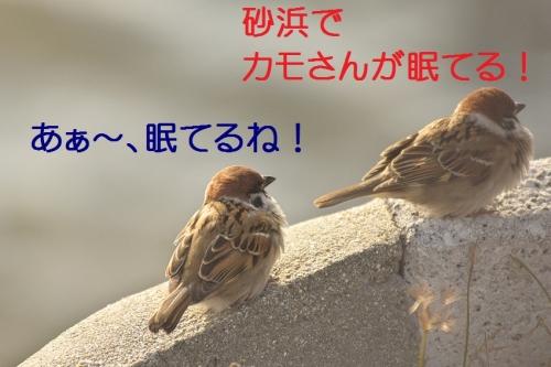 090_20140107183649bc5.jpg
