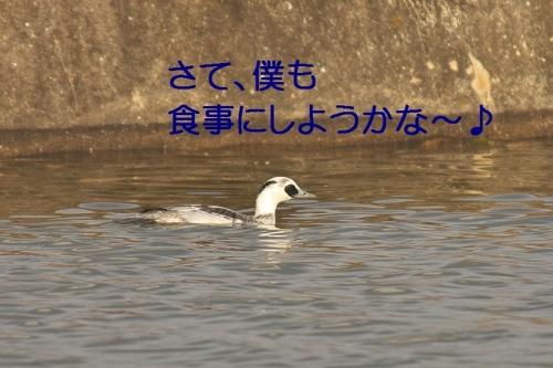 090_20140116184038181.jpg
