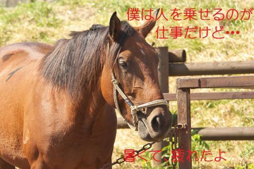 100_20130927212232f58.jpg