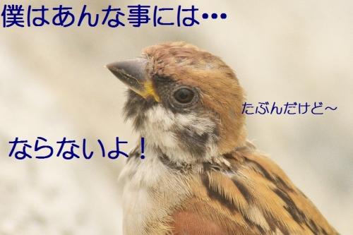 100_20131019180637f6d.jpg
