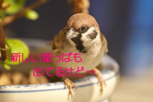 100_20131130201251688.jpg
