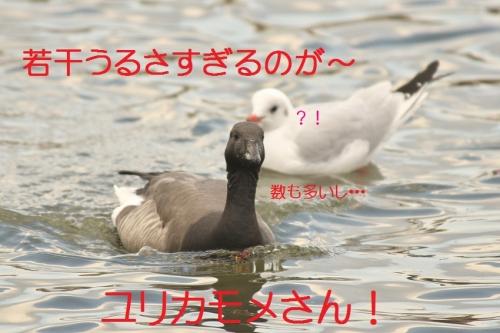 100_20140113182825d12.jpg