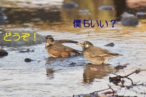 100_20140131213150f2f.jpg