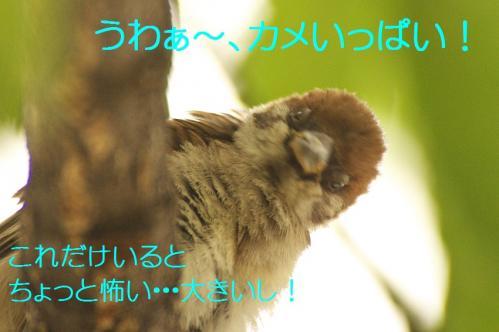 110_20130820194512649.jpg