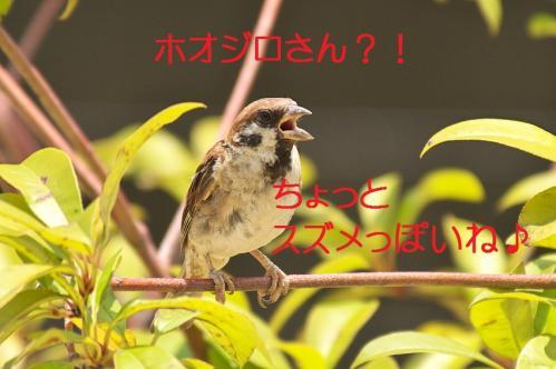 110_20130823223212ad7.jpg