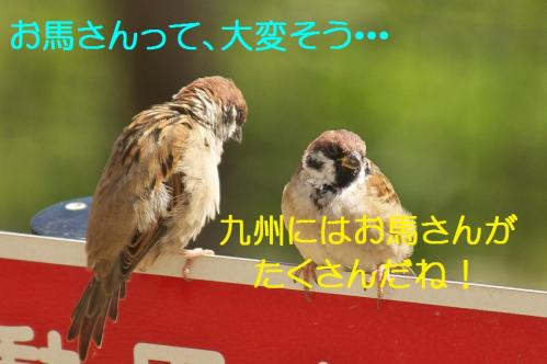 110_20130927212236898.jpg