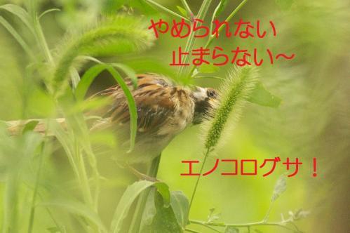 110_20130930213516e59.jpg