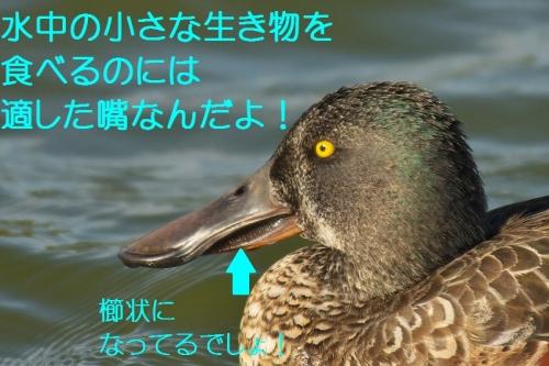 110_20131026192845bdb.jpg