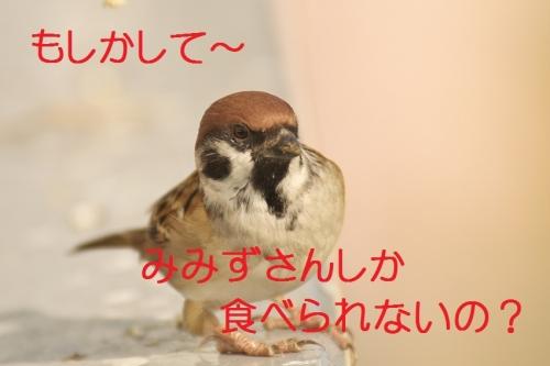 110_20131105170545d3e.jpg