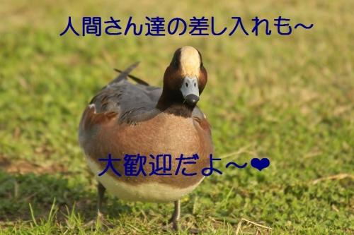 110_201311281830038dd.jpg