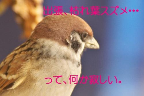 110_20131130201448555.jpg