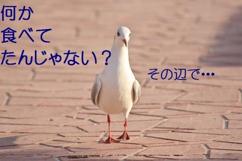 110_201401041800584b2.jpg