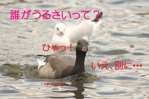 110_20140113182829d63.jpg