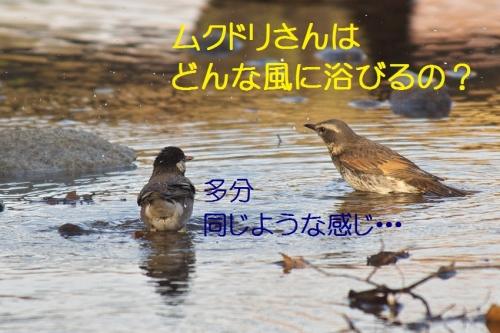 110_20140131213230a69.jpg