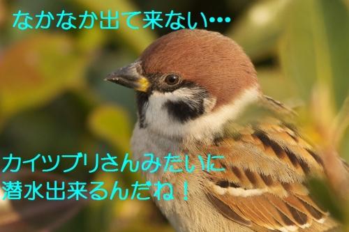 115_20140116184305f96.jpg