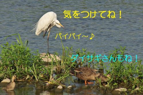 120_20130803192746bf0.jpg