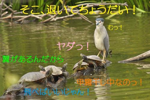 120_201308201945161c4.jpg