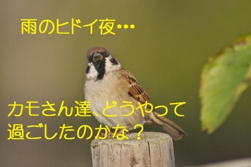 120_201310261929320c5.jpg