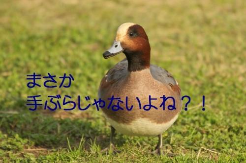 120_20131128183007eaa.jpg