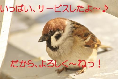 120_20131130201451933.jpg