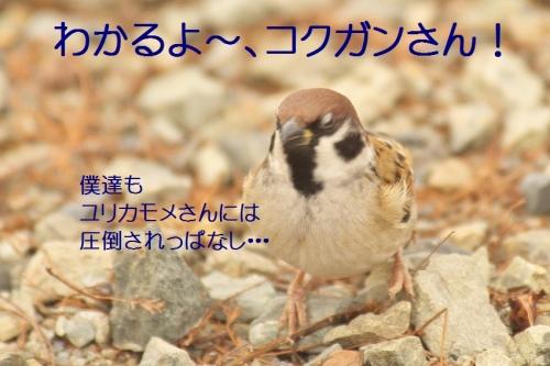 120_20140113182917ef9.jpg