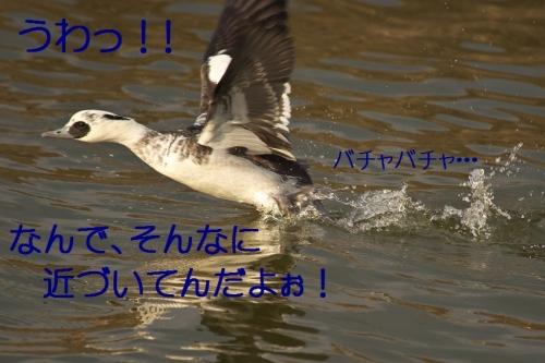 120_201401161843085aa.jpg