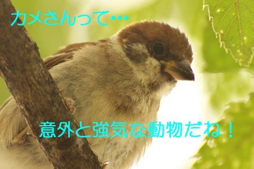 130_2013082019455609a.jpg