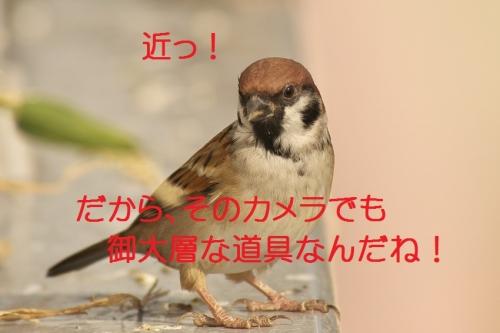 130_20131104192238679.jpg
