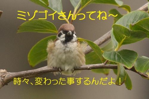 130_20131106210746ba1.jpg
