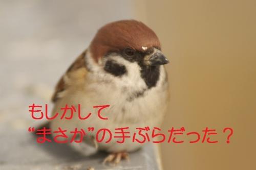 130_20131128183011281.jpg
