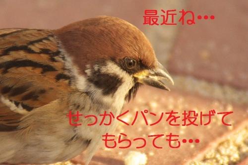 130_20140104180105e2f.jpg