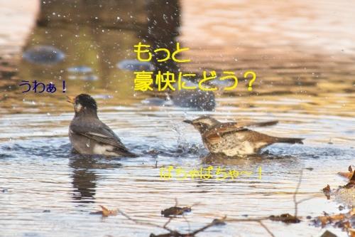 130_20140131213238214.jpg