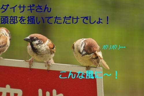 140_20130803192754f36.jpg