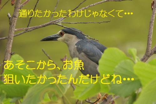 140_20130820194559e29.jpg