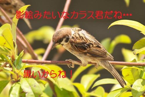 140_20130823225037406.jpg