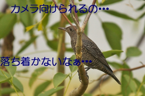 140_2013101918103401b.jpg