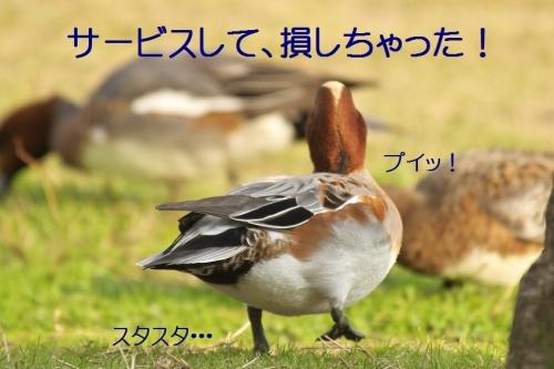 140_20131128183014192.jpg