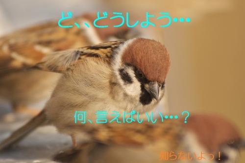 140_20131230203634465.jpg