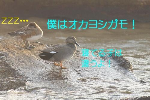 140_201401071840119d5.jpg