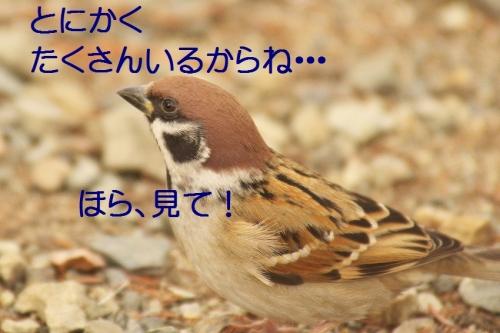 140_20140113182924dea.jpg