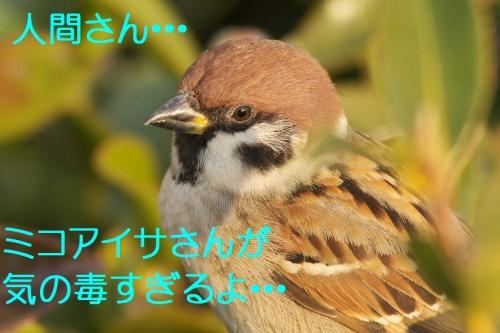 140_20140116184316043.jpg