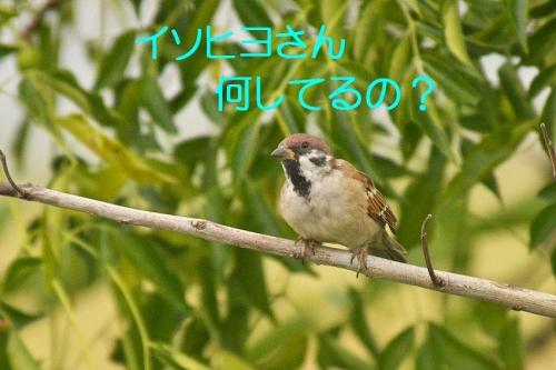 145_20131019181039207.jpg