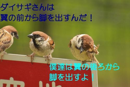 150_20130803193036f1a.jpg