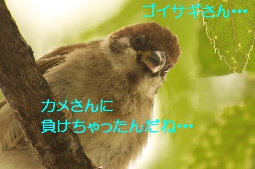 150_20130820194603add.jpg