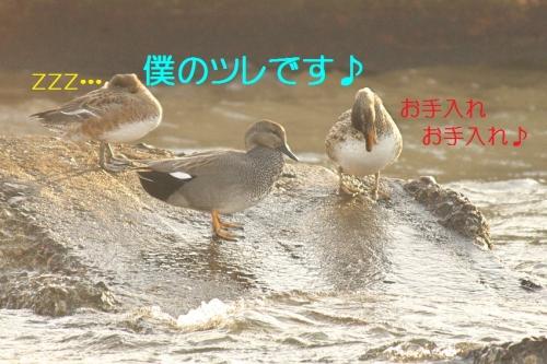 150_20140107184015914.jpg