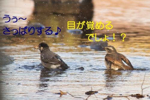 150_2014013121324502b.jpg